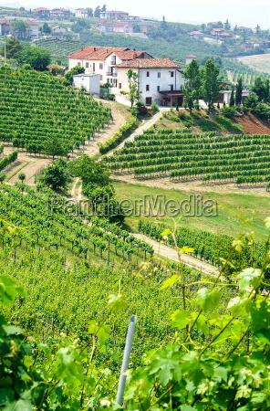 winnice i winiarnie w piemoncie