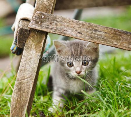 piekny mily ogrod ogrodek zwierze ssak