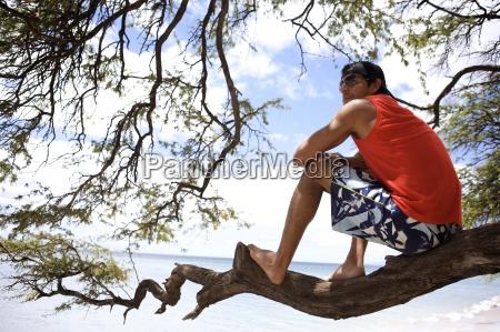 drzewo usa poziome poziomo boso konar
