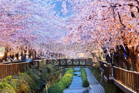 niebieski slynny drzewo park kwiat kwiatek