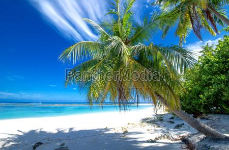 zacisznej plazy z palmami