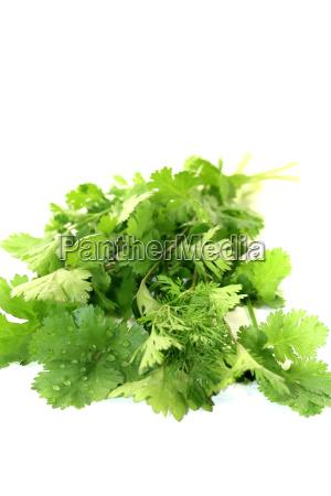 fresh green bunch coriander