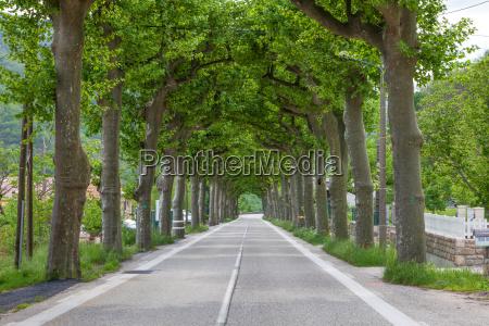 droga wiejska biegnaca przez alejke drzewa