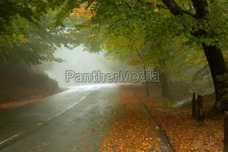 mgla mglisty krajobrazowym puszcza las lesnictwo