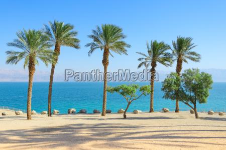 dekoracje morza martwego z palmami na