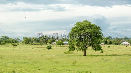 drzewo wegetacja pejzaz krajobraz natura trawnik