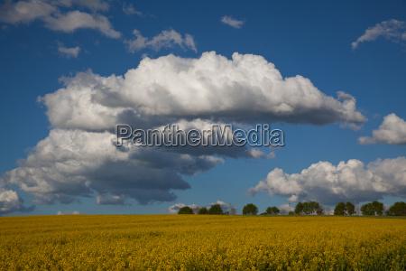 niebieski rzepak pole rzepaku tworzenie chmur