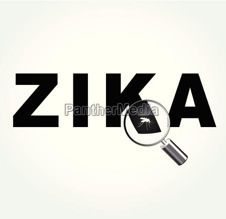 komar na wirusie zika