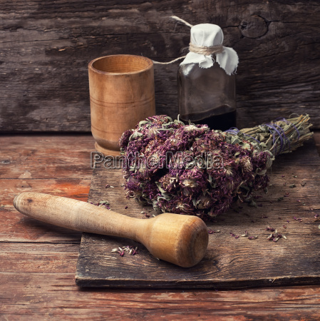 zbieranie ziol leczniczych