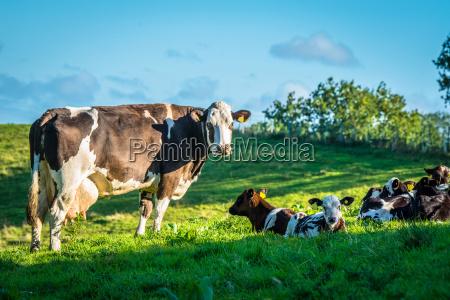 niebieski rolnictwo przyroda srodowisko zwierze ssak