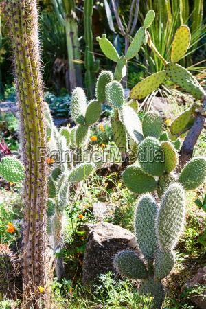 ogrod ogrodek dziczyzna dzika swiecenie swiatla