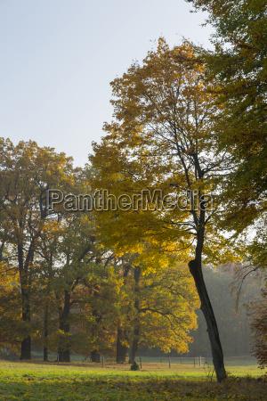drzewo drzewa pozne lato jesienne liscie