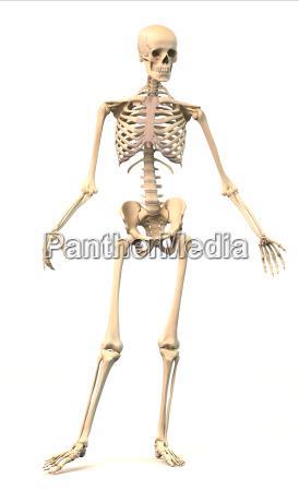 mezczyzna szkielet ludzki w pozycji dynamicznej