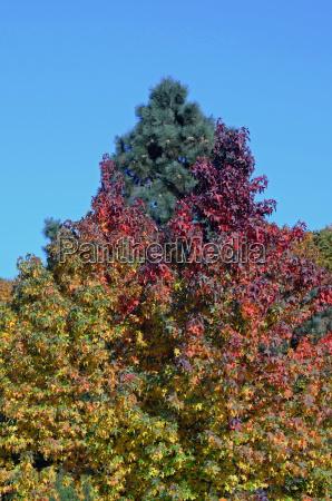 kolor kolonia wegetacja sezon puszcza las