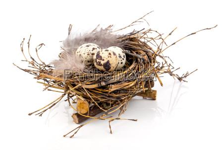 jaja przepiorcze w gniezdzie