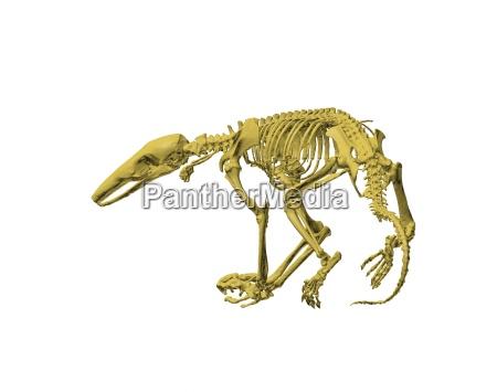 exempted szkielet mrowkojady