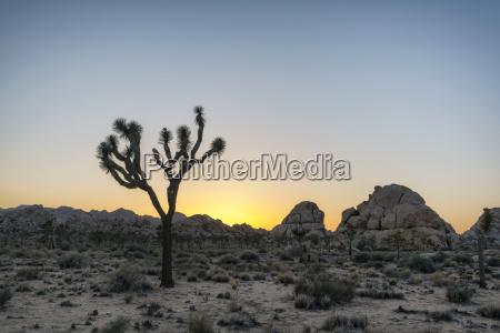 jazda podrozowanie pustynia urlop urlop wypoczynkowy