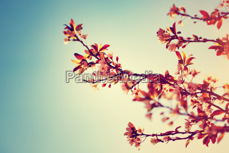 piekna kwitnaca drzewna granica