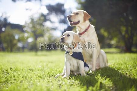 dwa psy prowadzace w szkoleniu psow