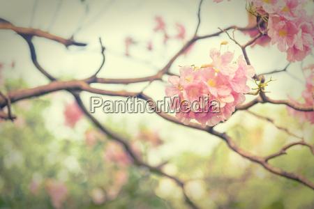 rozowy trabka kwiat styl vintage efekt
