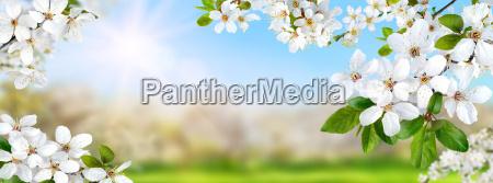 wiosna raj z bialymi kwiatami slonce