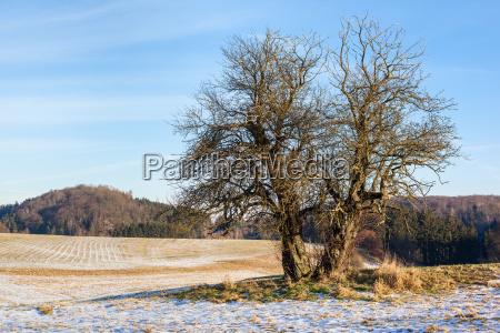 drzewo gory pole zywica bush firmament