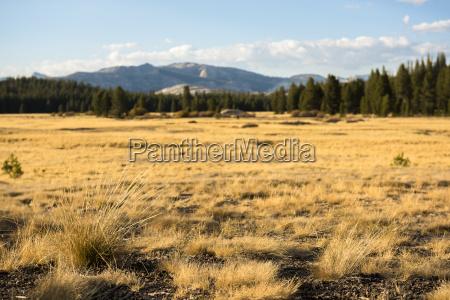 widok na dziewiczy krajobraz w tolumne