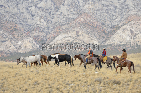 cowboys and cowgirl herding horses in