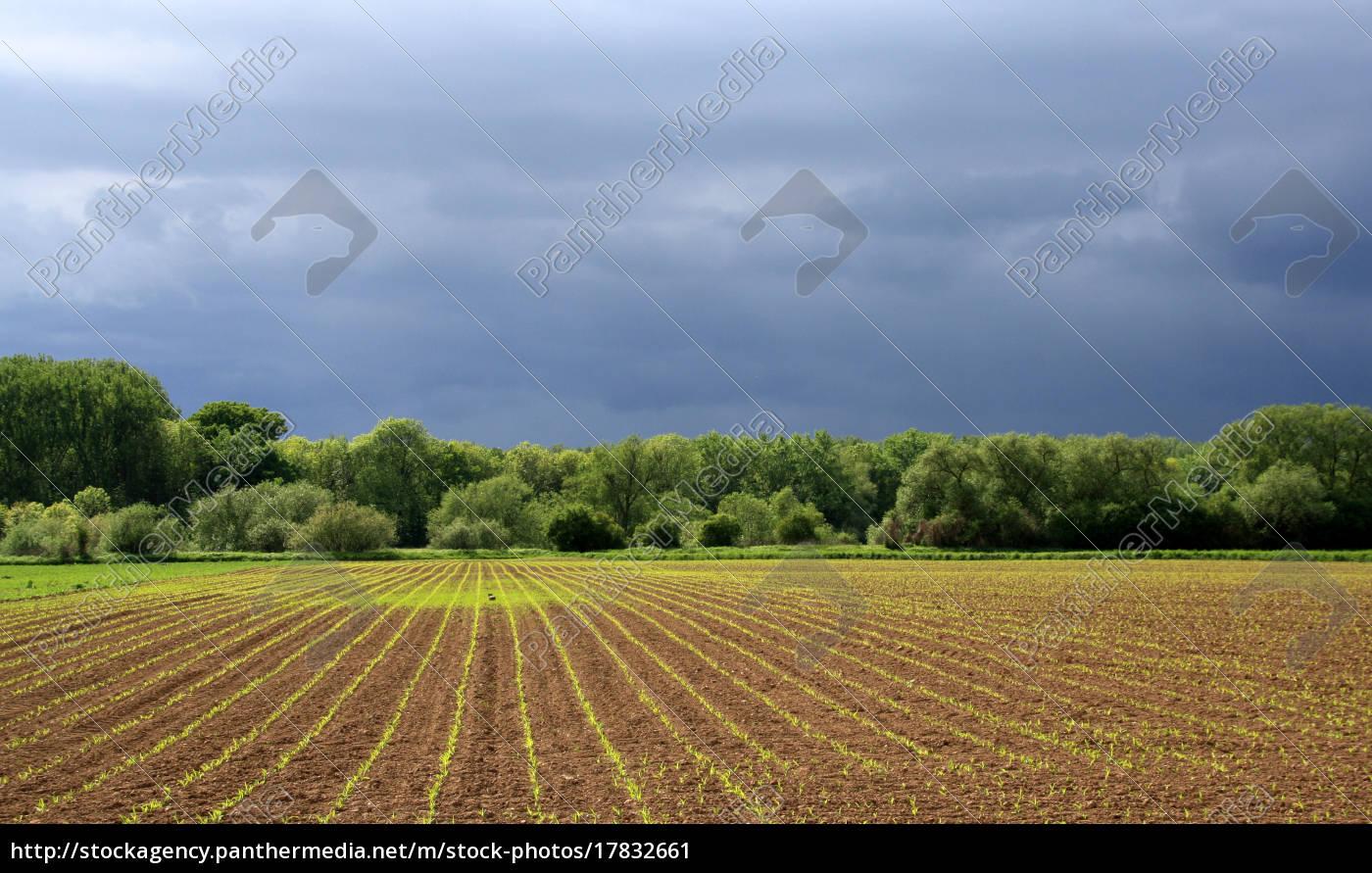 majowy, deszcz, przynosi, błogosławieństwa - 17832661