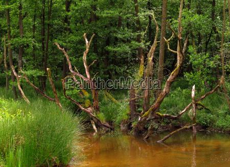 bagno rezerwat przyrody podmoklych
