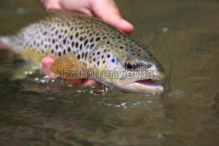 zblizenie zwierze brazowy brazowe brunetka ryba