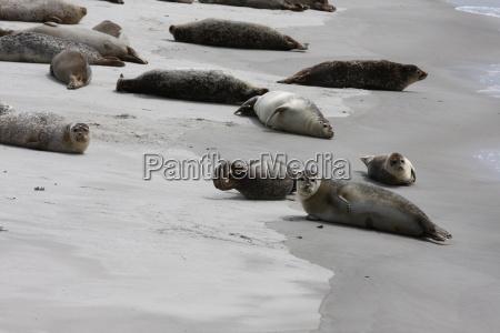 ssak zwierzeta zwierzatka plaza brzegach brzeg
