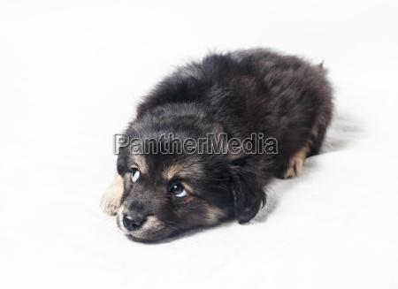 sliczne male szczenie pies