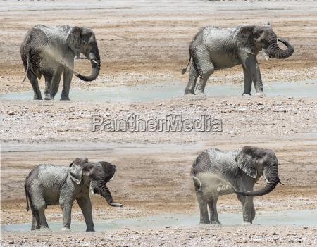 zwierze afryka slon dreck na zewnatrz