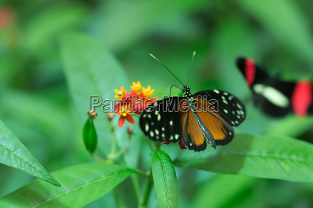 zauwazony maly motyl