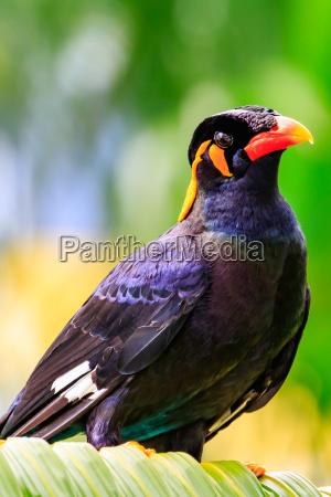 lot zwierze ptak dziczyzna dzika murzynka
