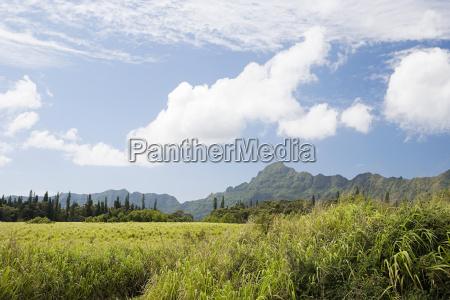 scena mountain w kauai