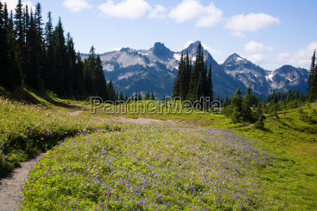 mount rainier national park and tatoosh