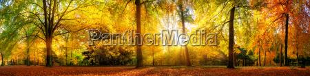panorama cudownie pieknego lasu jesienia w