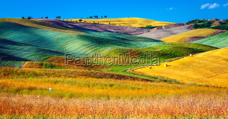 beautiful agricultural landscape