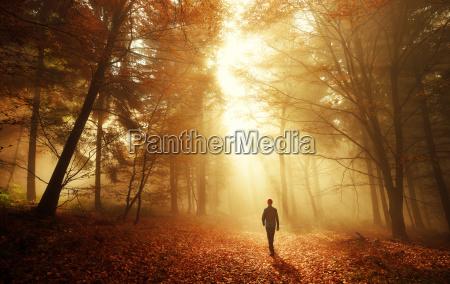 spacer w lesie z oszalamiajacy efekt
