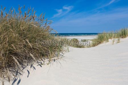 beach shore i trawa wydmowa w