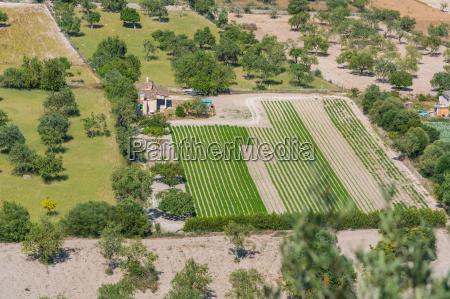 grunty rolne na majorce hiszpania