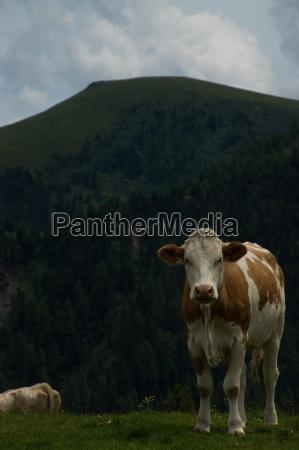alpy austria karyntia europa krajobraz natura