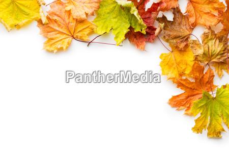 kolorowych lisci jesienia