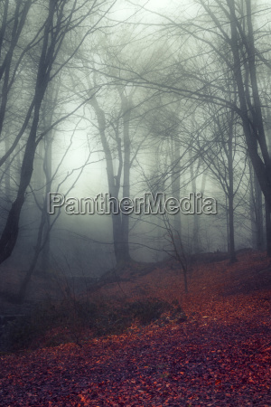 germany wuppertal forest at end of