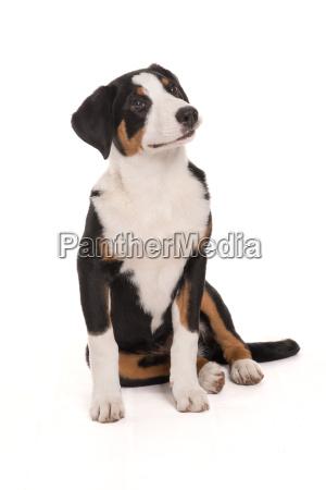 pies psy plac siodlo sitzplatz szczeniak