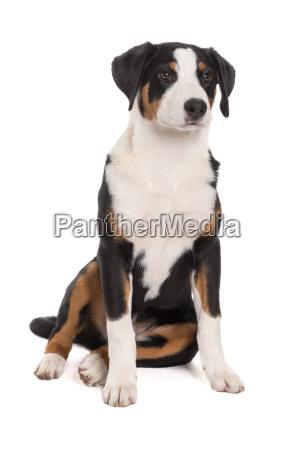 pies psy plac siodlo sitzplatz posiedzenie