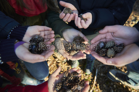 family holding pine cones in hands