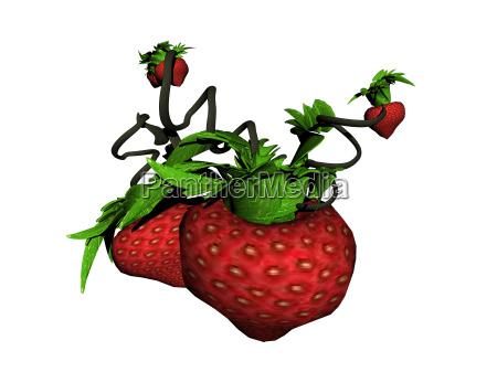 witaminy owoce owoc owocowe listowie miazsz